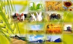 У 2019 році передбачено 7 напрямів фінансової підтримки спеціально для фермерів та кооперативів